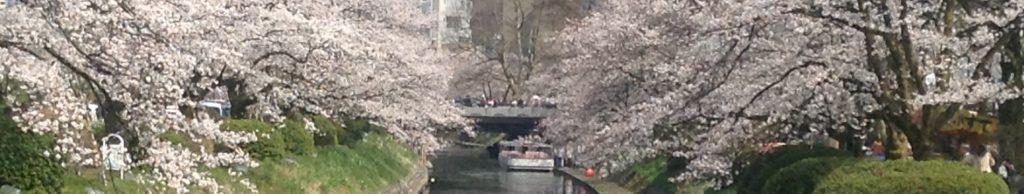 Sakura and Matsukawa in Toyama